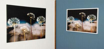 Bilder fra Viken Ide, copyright: Inger-Lise H S kontakt ingerlise@vikenide.no